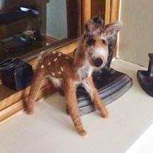 july cg 18 - julia watkin bambi fb
